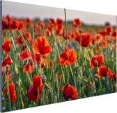 Klaprozen in het veld Aluminium 90x60 cm - Foto print op Aluminium (metaal wanddecoratie)