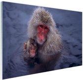 Sneeuwaap met jong Glas 60x40 cm - Foto print op Glas (Plexiglas wanddecoratie)