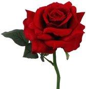 Fun & Feest Bloemen Rode roos deluxe