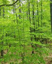 School Composition Book Springtime Trees