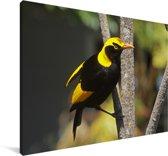 Zwart-gele prieelvogel in een boom Canvas 140x90 cm - Foto print op Canvas schilderij (Wanddecoratie woonkamer / slaapkamer)