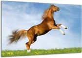 Glasschilderij Paard   Bruin, Blauw, Wit   120x70cm 1Luik   Foto print op Glas    F002646