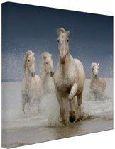 Witte paarden in het water Canvas 60x40 cm - Foto print op Canvas schilderij (Wanddecoratie woonkamer / slaapkamer) / Dieren Canvas Schilderijen
