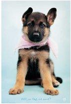 Herdershond pup poster Thomas 61x91.5cm.