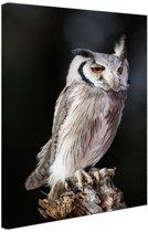 Dwergooruil Canvas 60x80 cm - Foto print op Canvas schilderij (Wanddecoratie woonkamer / slaapkamer) / Dieren Canvas Schilderijen