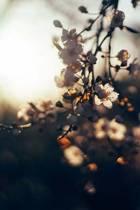 Flowers at Sunrise Journal
