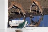 Fotobehang vinyl - Twee drinkende Gazelle's in Afrika breedte 390 cm x hoogte 260 cm - Foto print op behang (in 7 formaten beschikbaar)