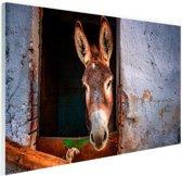 FotoCadeau.nl - Ezel in de stal Glas 60x40 cm - Foto print op Glas (Plexiglas wanddecoratie)