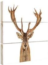 Close-up van een edelhert  Hout 160x120 cm - Foto print op Hout (Wanddecoratie) XXL / Groot formaat!