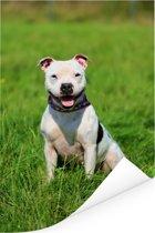 Glimlachende Staffordshire Bull Terrier Poster 80x120 cm - Foto print op Poster (wanddecoratie woonkamer / slaapkamer) / Huisdieren Poster