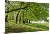 Knalgroene bomen in het Nationaal park South Downs in Engeland Aluminium 90x60 cm - Foto print op Aluminium (metaal wanddecoratie)