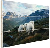 Familie portret schapen Hout 80x60 cm - Foto print op Hout (Wanddecoratie)