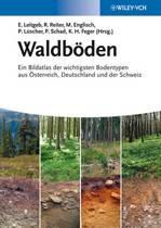 Waldboeden