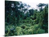 Cluse-up van de Jungle in het nationaal park Calilegua in Argentinië Aluminium 80x60 cm - Foto print op Aluminium (metaal wanddecoratie)