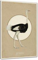 Ostrich - Struisvogel - 40x60 cm - Anne Waltz - PixaPrint - WE-0026-1
