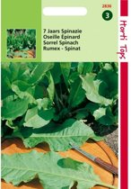 Spinazie 7 jaars - Rumex patientia - set van 8 stuks