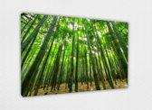Bamboo Grove 80x50 cm, Canvas schilderij uitgerekt op het frame, 100% katoen, Wanddecoratie