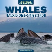 Whales Work Together