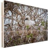 Snoezig kuikentje van de Blauwvoetgent in zijn nest Vurenhout met planken 60x40 cm - Foto print op Hout (Wanddecoratie)