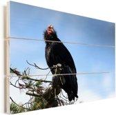 Een Californische condor zit in een boom Vurenhout met planken 80x60 cm - Foto print op Hout (Wanddecoratie)