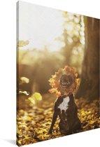 Staffordshire Bull Terrier tussen de herfstbladeren Canvas 120x180 cm - Foto print op Canvas schilderij (Wanddecoratie woonkamer / slaapkamer) / Huisdieren Canvas Schilderijen XXL / Groot formaat!