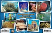 Franko Maps Coral Card Caribbean Coral ID Card / Coral Reef - 2017