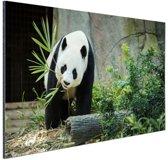 Grote panda Aluminium 30x20 cm - klein - Foto print op Aluminium (metaal wanddecoratie)