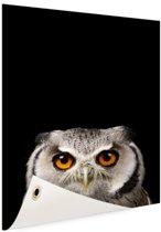 Portret uil Tuinposter 80x120 cm - Foto op Tuinposter / Schilderijen voor buiten (tuin decoratie)