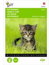 Buzzy® Kattengras Gerst