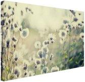 Witte bloemen in veld Canvas 60x40 cm - Foto print op Canvas schilderij (Wanddecoratie woonkamer / slaapkamer) / Bloemen Canvas Schilderijen