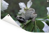 Japanse boomkikker op een bloem in het Nationaal park Bikin in Rusland Tuinposter 180x120 cm - Tuindoek / Buitencanvas / Schilderijen voor buiten (tuin decoratie) XXL / Groot formaat!