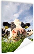 Nieuwsgierige koe Poster 40x60 cm - Foto print op Poster (wanddecoratie woonkamer / slaapkamer) / Dieren Poster