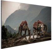Ezels op een bergpad Aluminium 180x120 cm - Foto print op Aluminium (metaal wanddecoratie) XXL / Groot formaat!