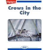 Crows in the City