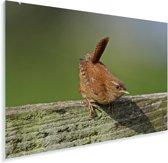 Winterkoning op een groen houten hek Plexiglas 60x40 cm - Foto print op Glas (Plexiglas wanddecoratie)