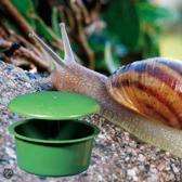 Guard´n Care Slakkenbestrijding Anti 9,5 cm hoog  - Lokt slakken binnen een straal van 10m²