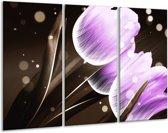 Canvas schilderij Tulp | Paars, Bruin | 120x80cm 3Luik