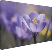 Bloeiende paarse bloem Canvas 120x80 cm - Foto print op Canvas schilderij (Wanddecoratie)