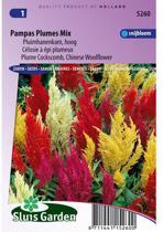 Sluis Garden - Pluimhanenkam Pampas Plume Mix (Celosia)