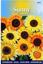 Zonnebloem Music Box - Helianthus (Sunflowers) - set van 6 stuks