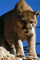 Puma Journal
