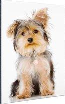 Portret van Yorkshire terrier Aluminium 120x180 cm - Foto print op Aluminium (metaal wanddecoratie) XXL / Groot formaat!