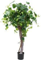 Druivenboom op stam 165cm