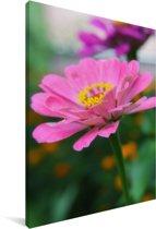 Zinnia bloeit in de tuin Canvas 90x140 cm - Foto print op Canvas schilderij (Wanddecoratie woonkamer / slaapkamer)