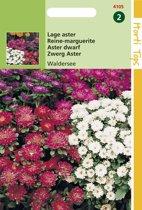 Hortitops Zaden - Callistephus Chinensis Waldersee Gemengd