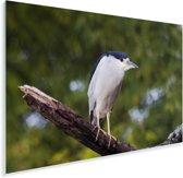 Schuitbekreiger op een tak Plexiglas 180x120 cm - Foto print op Glas (Plexiglas wanddecoratie) XXL / Groot formaat!