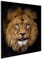Leeuw portret fotoafdruk Glas 80x120 cm - Foto print op Glas (Plexiglas wanddecoratie)