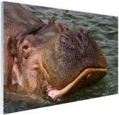 Zwemmende nijlpaard Glas 90x60 cm - Foto print op Glas (Plexiglas wanddecoratie)
