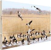 Groep ganzen in het water Hout 120x80 cm - Foto print op Hout (Wanddecoratie)