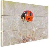 Lieveheersbeestje op paardebloem Hout 120x80 cm - Foto print op Hout (Wanddecoratie)